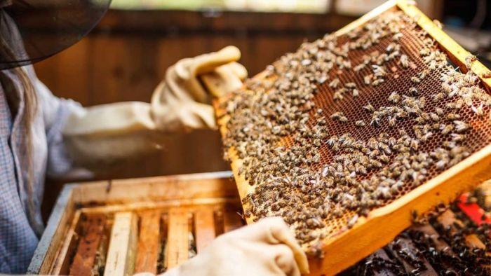 Bee-centric Beekeeping