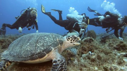 Hawksbill Turtle with students DeLaTorre, Holt and Prezekop