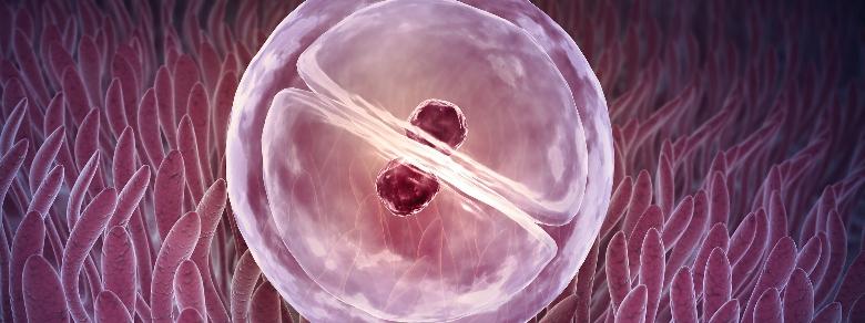 Creato per la prima volta un embrione ibrido pecora-uomo