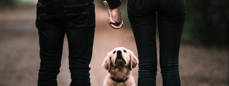 Incontri: quanto conta avere un cane?