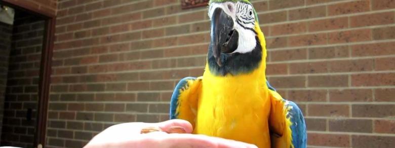 La tradisce con la cameriera: il pappagallo lo mette nei guai