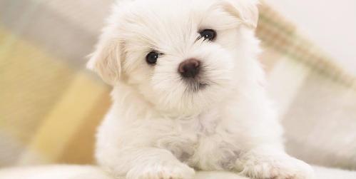 cani di taglia piccola