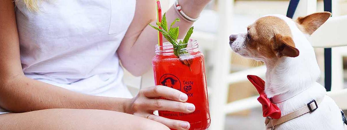 Bar dog friendly, l'ultima idea degli inglesi