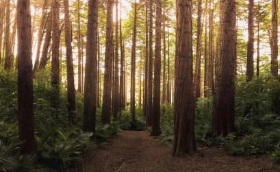 foresta - economia circolare