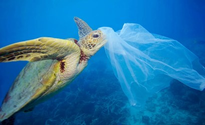 petizione del wwf - tartaruga marina impigliata nella plastica
