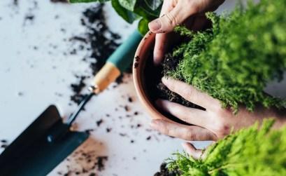 piante-d'appartamento_cure-fine-inverno