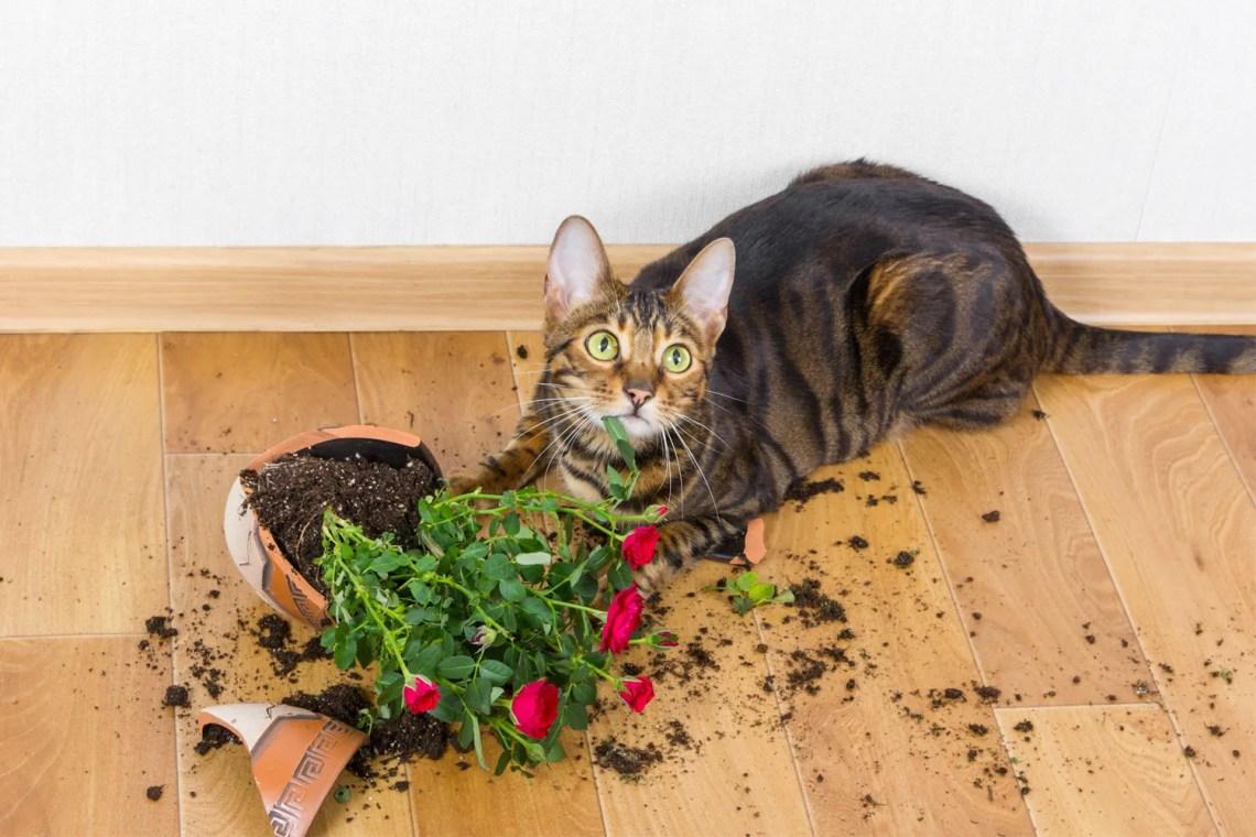 salvare-le-piante-dal-gatto - vaso rotto