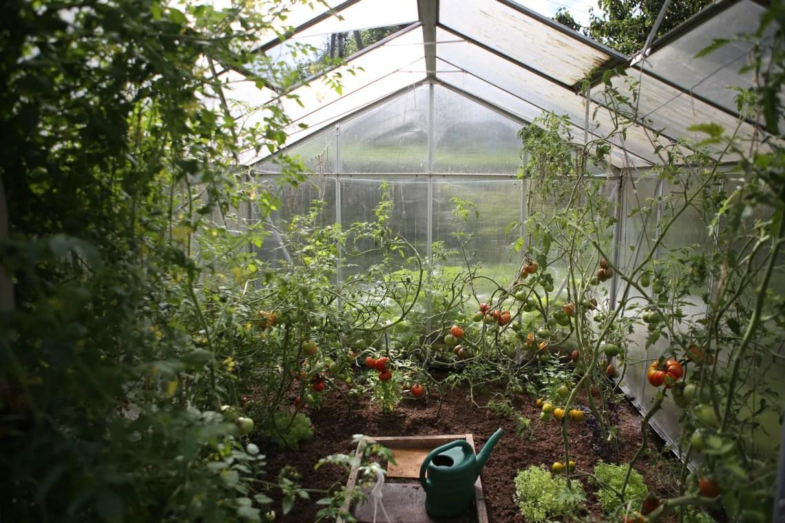 creare-un-orto_coltivaizone-verdure