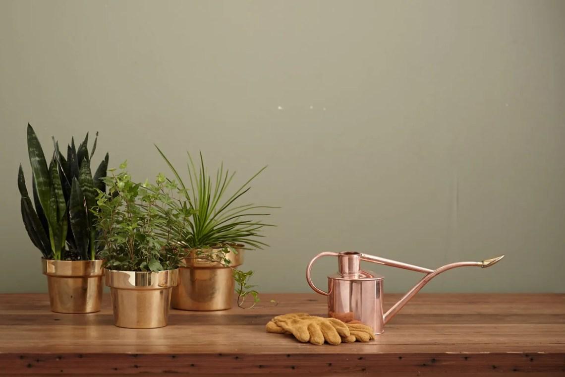 annaffiare-le-piante-in-vacanza_consigli-palazzetti