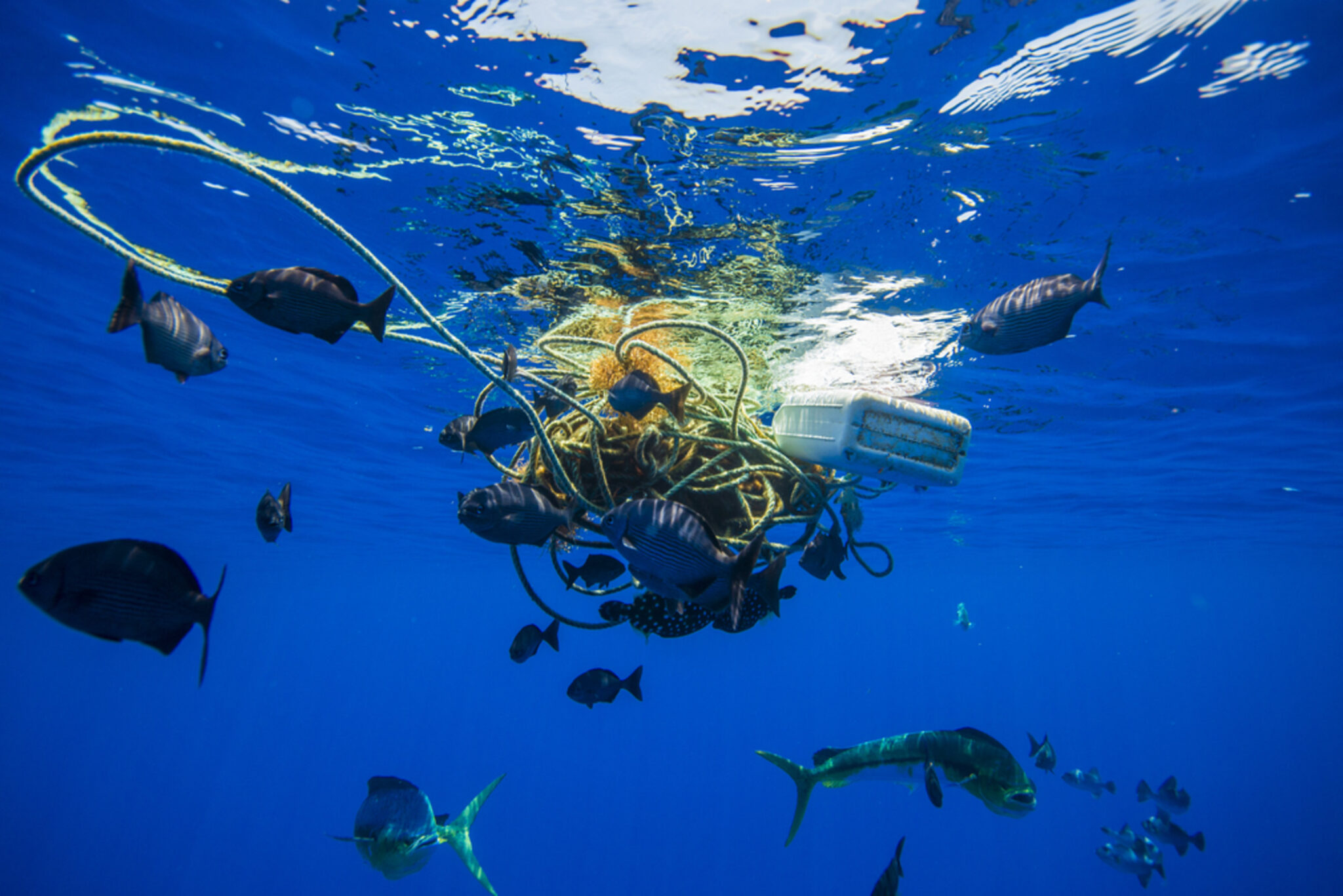The Us Needs A Federal Ban On Marine Plastic Pollution