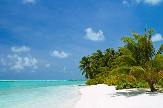 Stunning white sand beach with palm trees in the Maldives