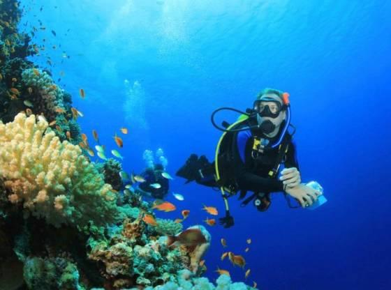 La foto mostra vari sub in immersione