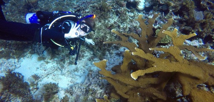 Studying Marine Ecology in Jamaica