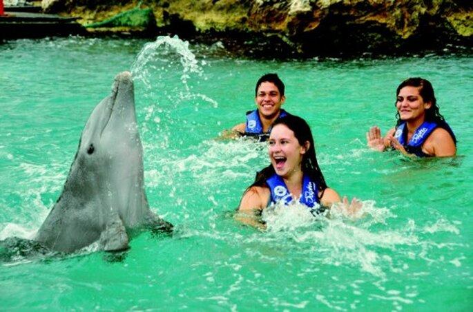 Elige nada con delfines en tu luna de miel en la Riviera Maya - Foto