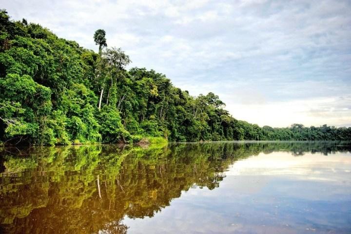 Dettaglio della foresta amazzonica nei dintorni di Puerto Maldonado