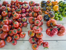 Supergrădinărit 2018 – An cu Roșii până în Decembrie