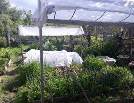 DIY Acoperiș de protecție pentru castraveți, din ștacheti și folie