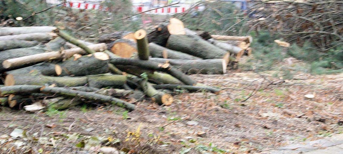 Czytelnik alarmuje…wycinają drzewa