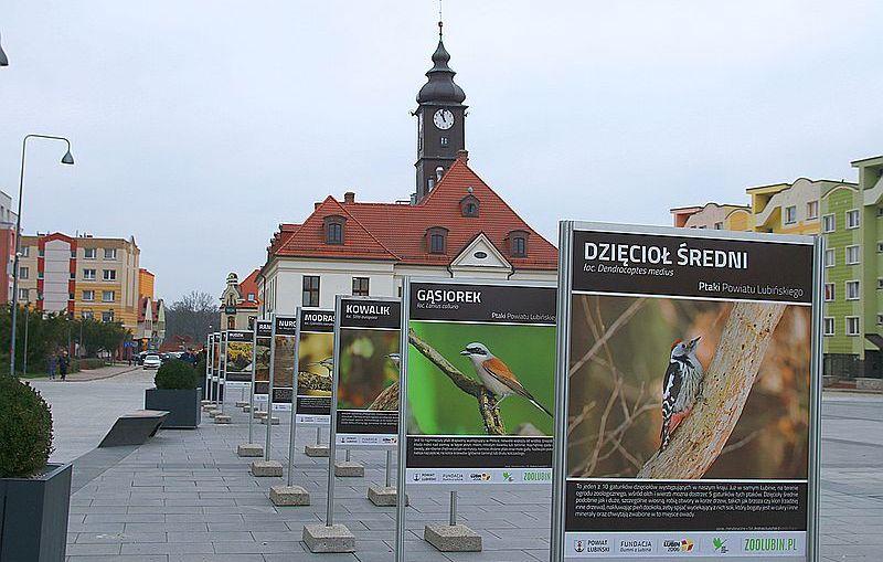 Ptaki Powiatu Lubińskiego – wystawa do obejrzenia w Rynku
