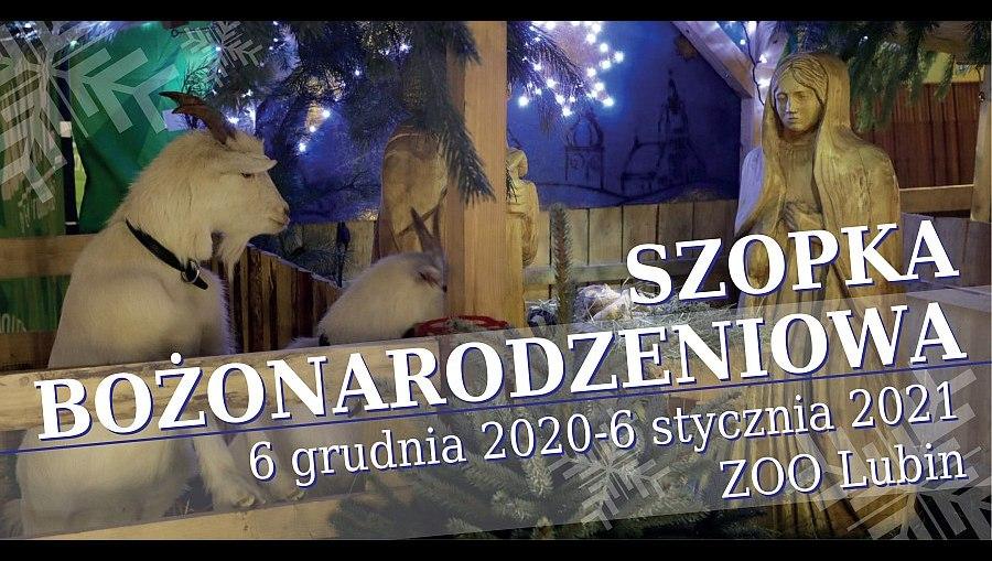 Szopka bożonarodzeniowa w lubińskim ZOO