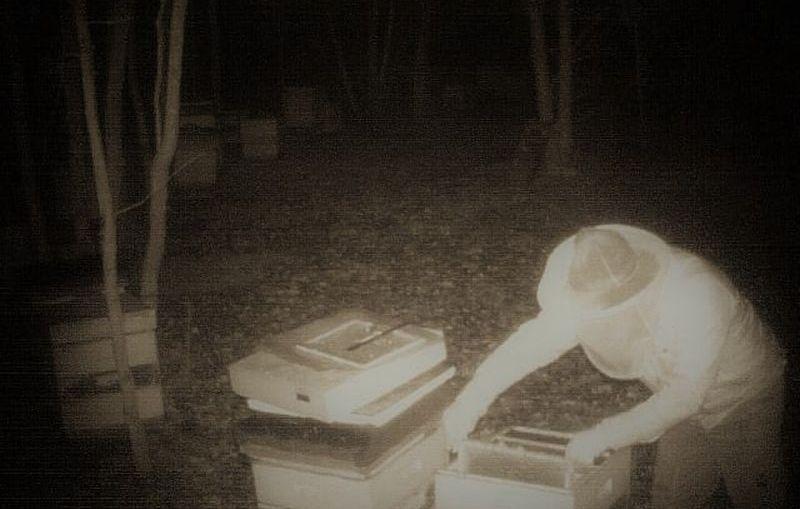 Bezmyślna kradzież, która może uśmiercić wiele pszczelich rodzin