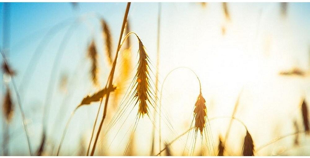Zgłoszenia do wojewódzkiego etapu konkursu AGROLIGA 2021