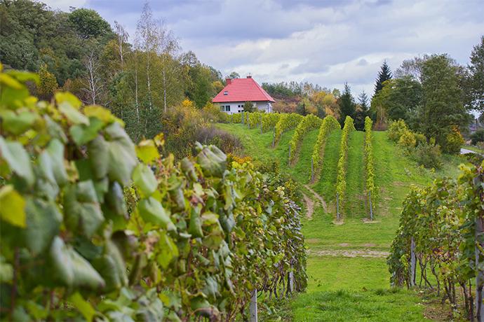 Szlakiem polskich winnic - Sandomierski Szlak Winiarski