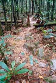 W-dzungli-u-pod…eden-szlak
