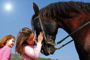 Przyjazny koń huculski doskonale sprawdza się w agroturystyce.