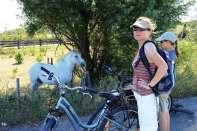 Półdzikie konie rasy Camargue