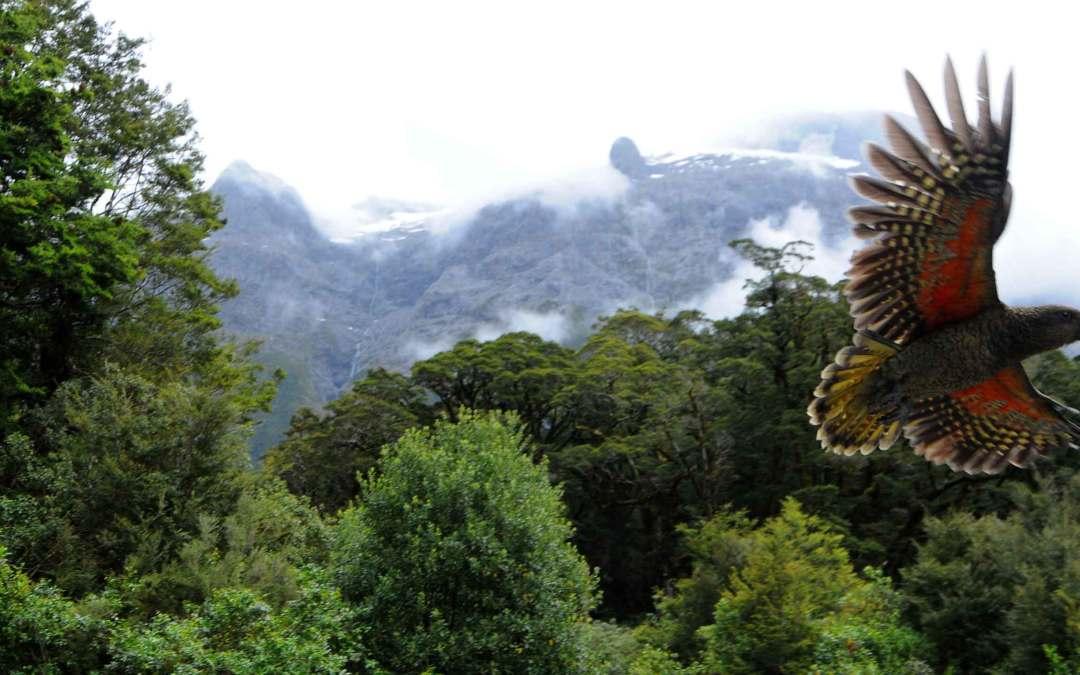 Nowa Zelandia – Kraj Długiego Białego Obłoku