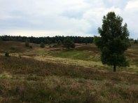 Lüneburger Heide, fot. Paweł Wroński