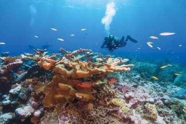 Corales-en-Montecristi