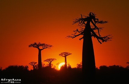 Madagaskar_1003_AOKK