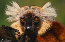 Madagaskar_13_AOKK