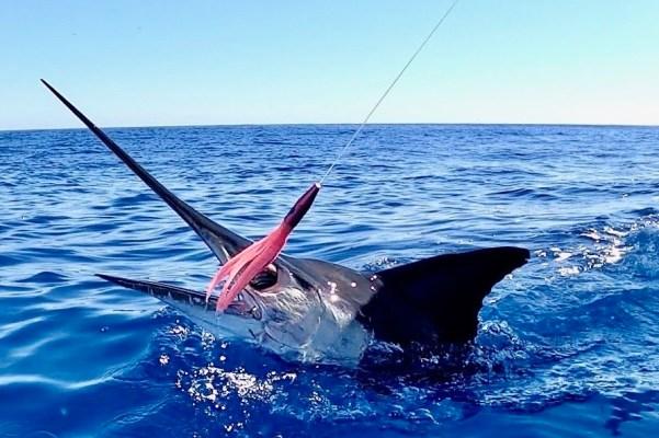 Marlin on Plomerito Lure