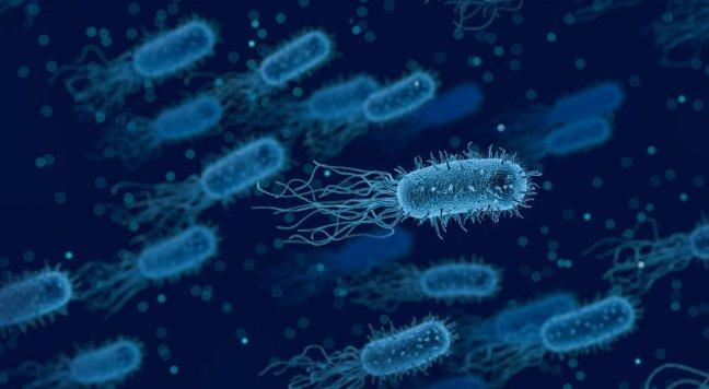 Unsere Darmbakterien sind unser Immunsystem, das müssen wir intakt halten.