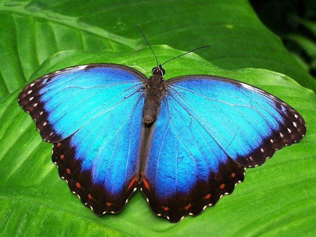 Die Schilddrüse hat die Form eines Schmetterlings.