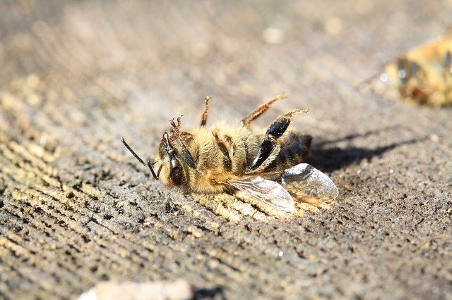Pestizide sind Toxine, sie töten auch unsere Bienen und Insekten.