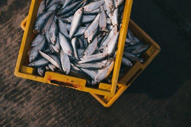Fetter Fisch ist die beste Quelle von Omega-3-Fetten.