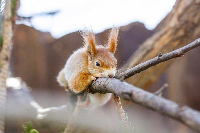 Die Eichhörnchenstrategie für Woche 2 - Sättigung