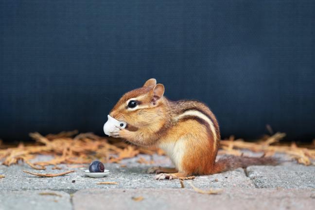 Eichhörnchenstrategie-3-Gesundheit-DrSchauenberg