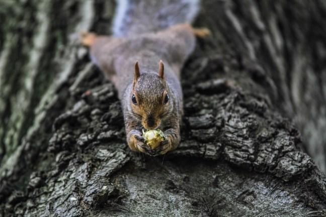 Eichhörnchenstrategie4-Ölwechsel-DrSchauenberg