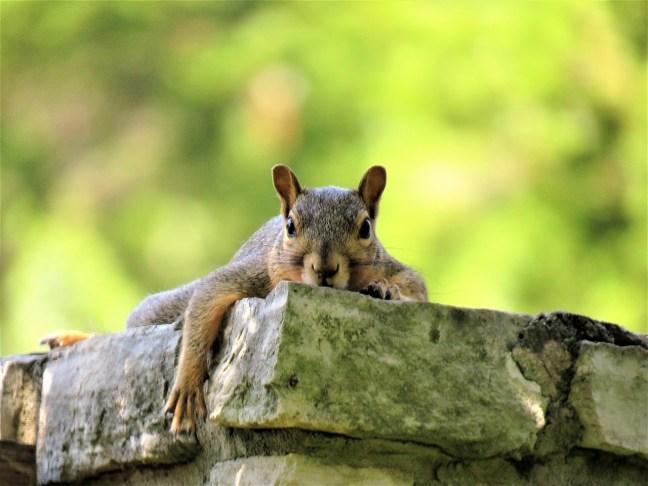 Eichhörnchenstrategie-7-Atmung_DrSchauenberg
