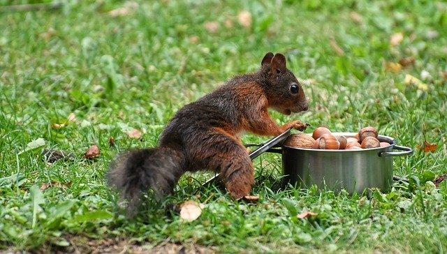 Mit der Eichhörnchenstrategie kannst du erstaunliche Veränderungen erreichen, einfach ein Schritt nach dem anderen.