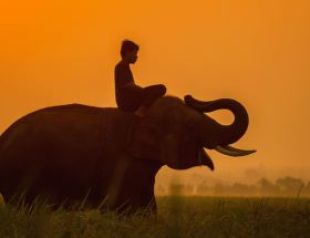 Rider and Elephant; Neuroscience; Metaphor; Stress