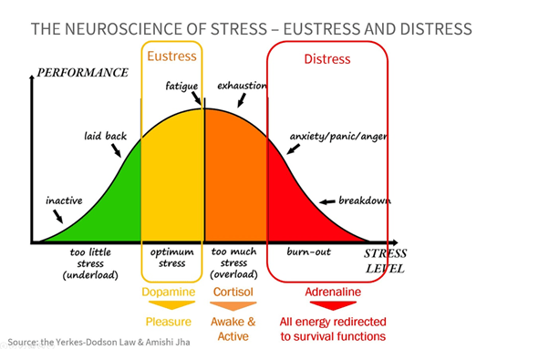 image 6 - The good side and the dark side of stress. The neuroscience behind it and its impact on our cognitive performance.