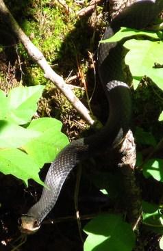 We often see snakes