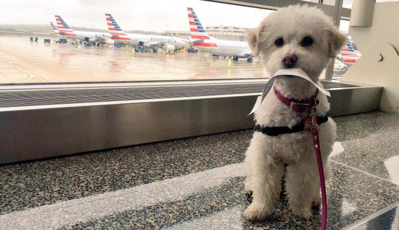 Our big list of tips for traveling with your dog