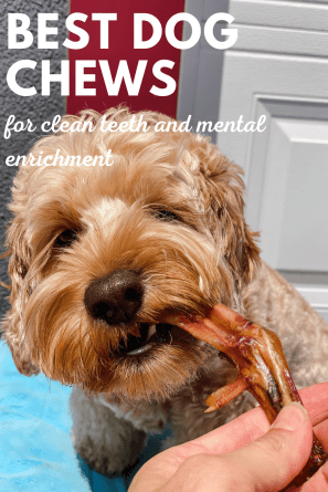 dog chews for clean teeth